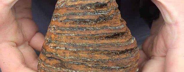 Մեծ Բրիտանիայում  մամոնտի ատամ են  գտել