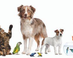 Այսօր տնային կենդանիների համաշխարհային օրն է