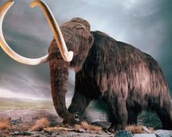 Մամոնտը  ապրել  է  40  000 տարի  առաջ